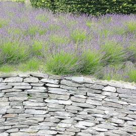 Portfolio Landscape Design Image